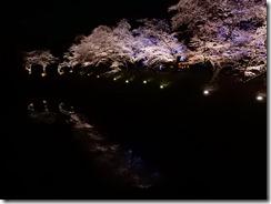 2019年(平成30年)4月18日 水面に映る夜桜  No,2