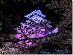 2019年(平成30年)4月18日 夜桜に映える鶴ヶ城  No,7
